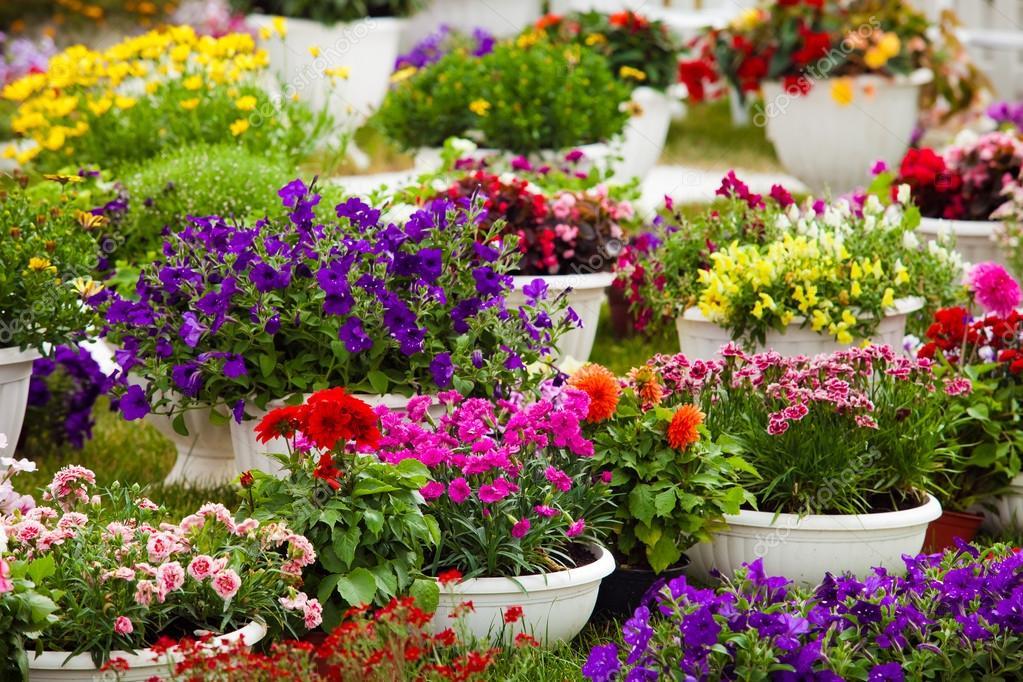 Цветы в горшках садовые