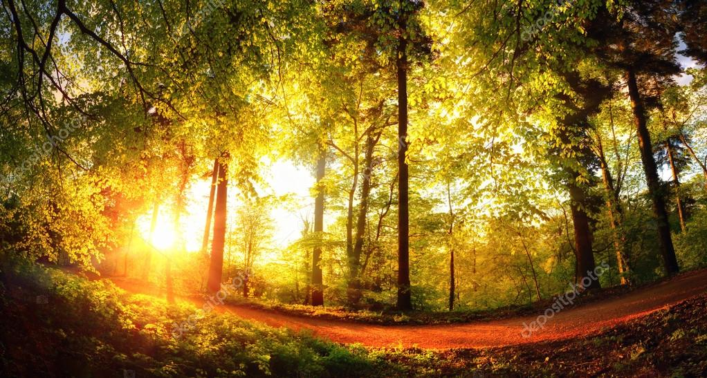 Фотообои Gold lit forest path at sunset