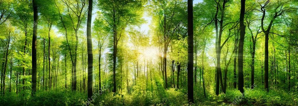 Фотообои Forest panorama with rays of sunlight