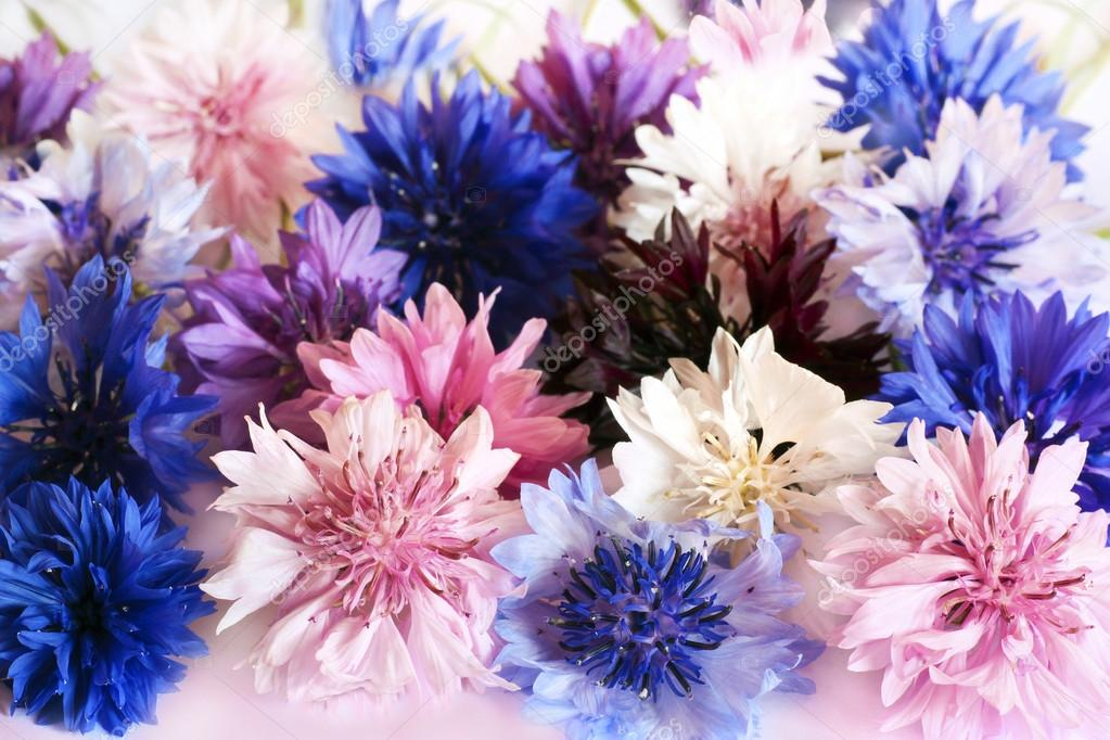 Cornflowers.