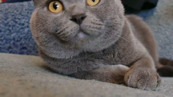Katze mit großen Augen auf dem Sofa liegend