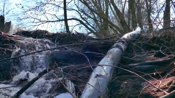 Stream Lesní řeka suché stromy vodopád Krajina pohybu videa