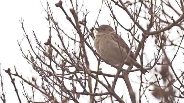 Sperlingsvogel sitzt auf einem Ast