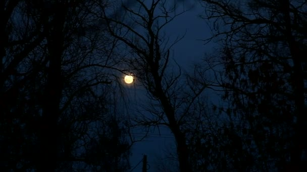 night moon trees beautiful landscape silhouettes of branches
