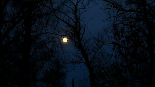 v noci měsíc stromy, krásná krajina siluety poboček