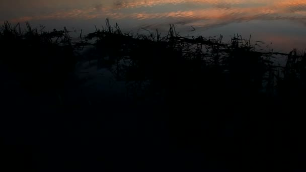 paesaggio bellissimo fiume cielo Siluetta di tramonto della natura