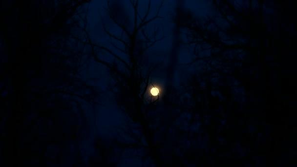 Hold éjszaka fák gyönyörű táj sziluettek ágak