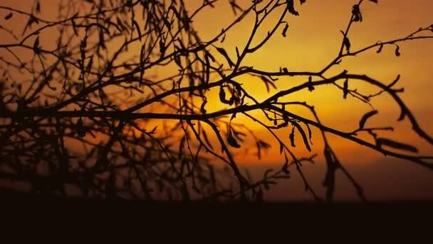 Birke-Sonnenuntergang Kontur-Ast auf orange Naturlandschaft