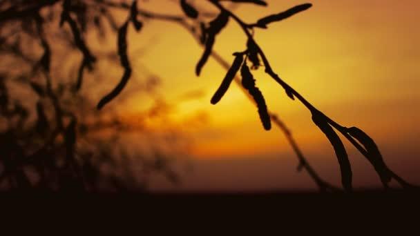 západ slunce větev silueta břízy na oranžové přírody krajiny