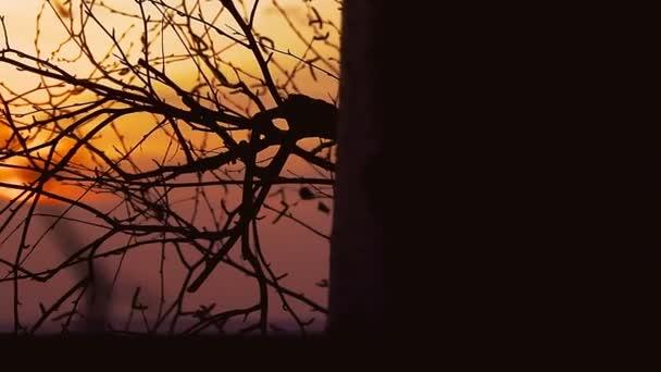 Siluetta di ramo dellalbero di betulla sul paesaggio natura tramonto arancione