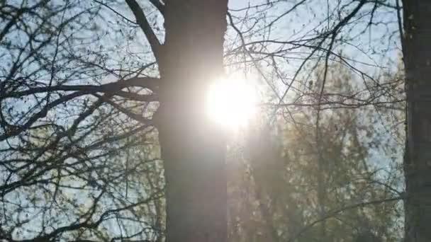 Jilm strom silueta slunce odlesky slunce lesní přírodní krajina