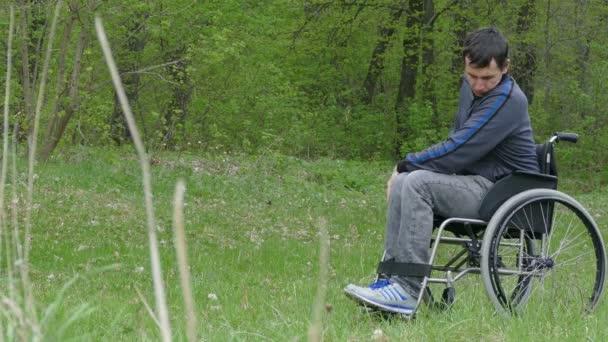 muž zakázán pohybující jízdy vozíku na koni chůze na přírodní zelené pozadí