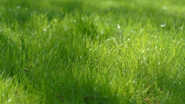 a napsugárzás, a zöld gyep slow-motion videót