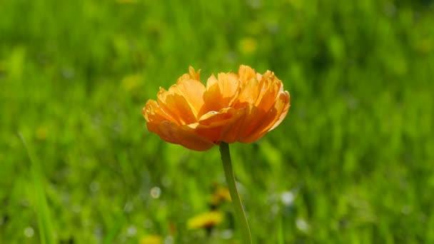 jarní pozadí krásné žluté květy