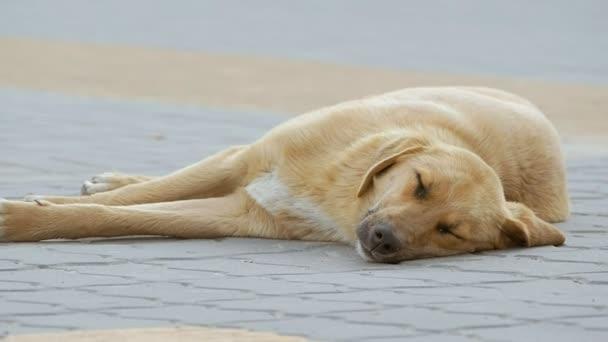 pes spí na chodníku slow motion videa