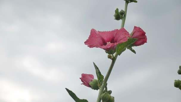 flower pink against the sky nature slow motion video