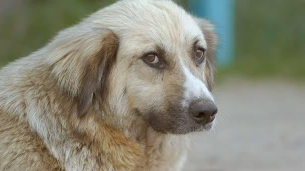 Detailní záběr psí tvář zpomalené video
