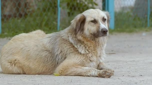 pes leží v silniční zpomalené video