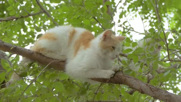 two cats on the tree slow motion video