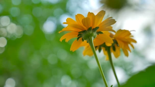 outdoors yellow flower on a background green slow motion video