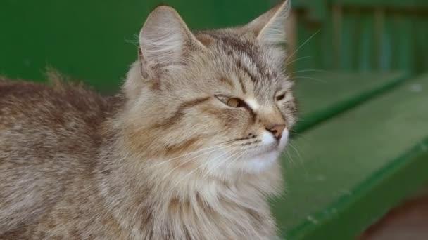 macska ásít vicces slow motion videó
