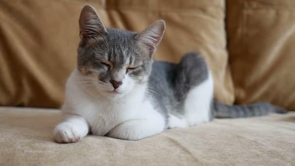 Cat-otthon ül a kanapén videó