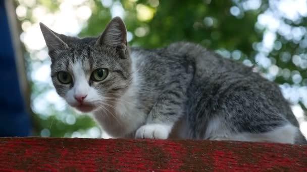 c75499db3 Divoká kočka sedící při pohledu na video kamery venkovní– stock záběr