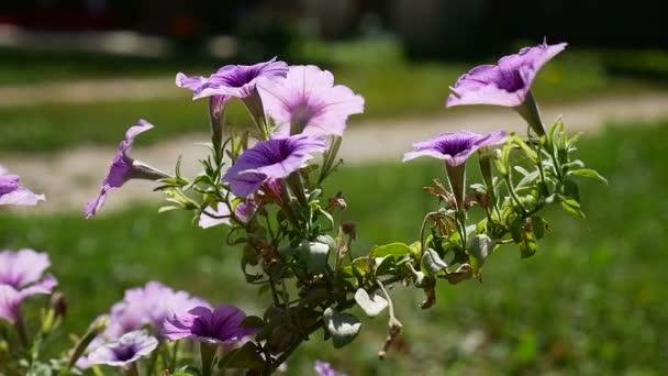 fialové květy na zeleném pozadí přírody krajiny video