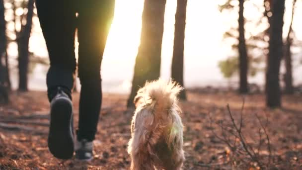 Spaziergänger gehen mit dem Hund im Parkwald spazieren. Reisekonzept. Nahaufnahme eines beinharten Mannes, der mit einem Hund im Park im Wald spazieren geht. Hundeauslaufkonzept. Wanderer Sneakers zu Fuß Nahaufnahme Park