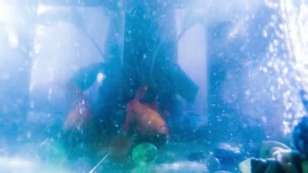 astratto blu bolle dacqua commovente galleggianti pesci delloro dei video hd 1920 x 1080 gopro