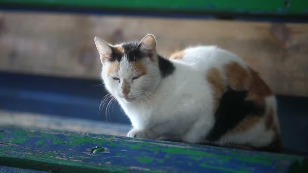 Gefleckte Katze sitzt auf einer Holzbank in der Sonne erwärmt sich ein video