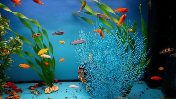 Acquario Pesci Sfondo Blu Calmo Nuoto Erba Screen Saver Dei Video