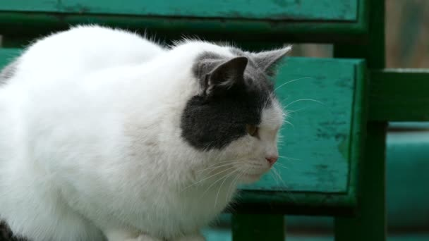 street white sulphur cat sitting on bench in outside cold autumn