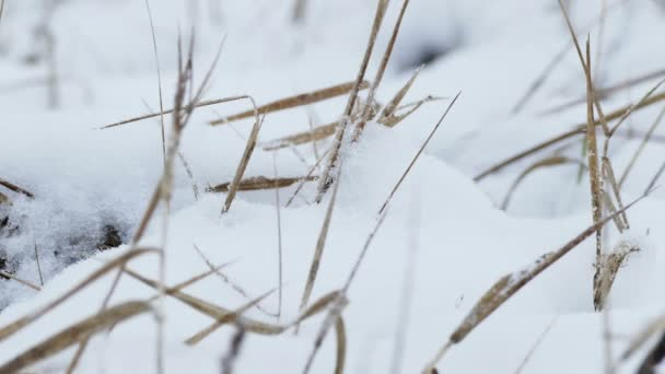 dry grass in snow wind winter nature field landscape