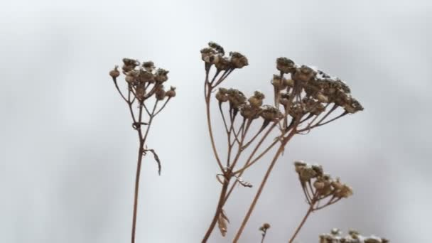 dry grass  in snow winter branch nature field landscape wind