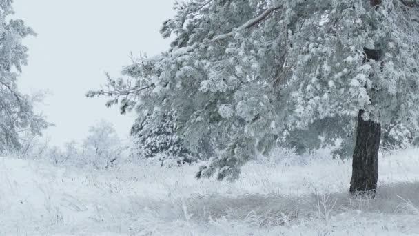 Tannenbaum Der Schneit.Tannenbaum Im Schnee Wilden Wald Weihnachten Winter Zweig Schneit