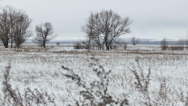 Pole s trávou a sněhem Rusko v zimní krajině na mrtvých stromech