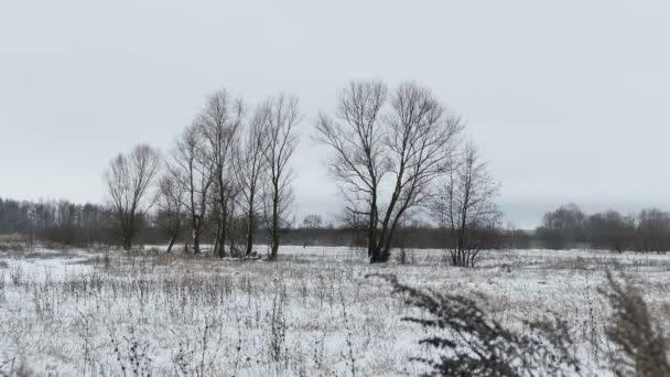 Pole s trávou a sněhem stranou Ruská mrtvá stromy zimní krajina
