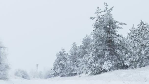 zimní stromů jedle do divokého lesa sníh, sněžit vánoční