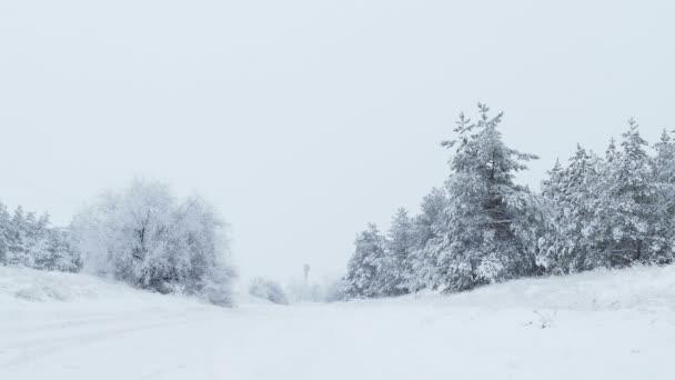jedle v sněhu zimní vánoční divokého lesa sněží