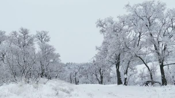 Wald Bäume Natur Schnee Winter schöne Weihnachten