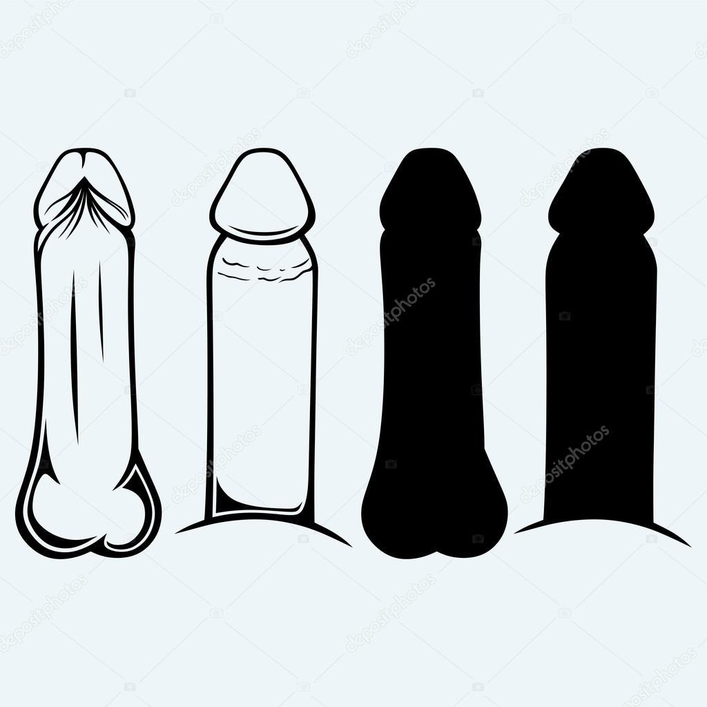 Anatomía del pene — Archivo Imágenes Vectoriales © Kreativ #82926526