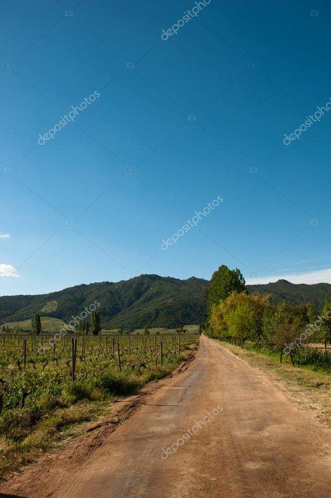 chile - carmenere wineyard in santa cruz