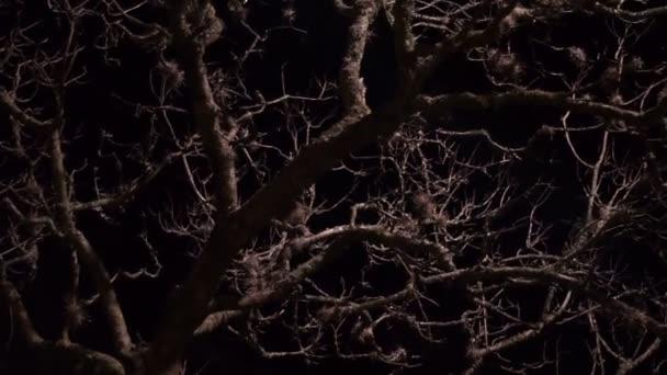 Mrtvý strom na strašidelné noci Dolly