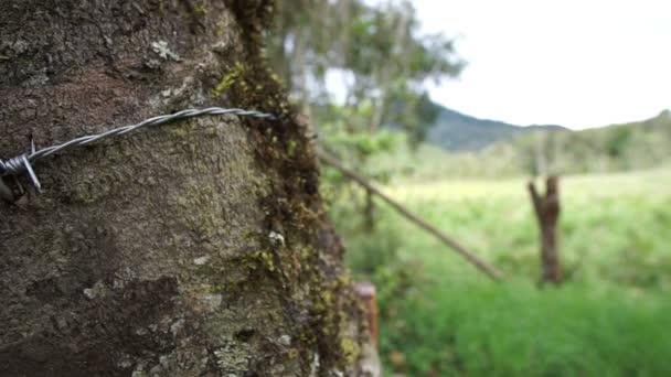 Stacheldraht Zaun Leben Baum Dolly — Stockvideo © Cactii #80056824