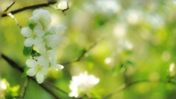Alma virág