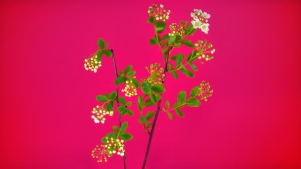 Kis virág Fullhd