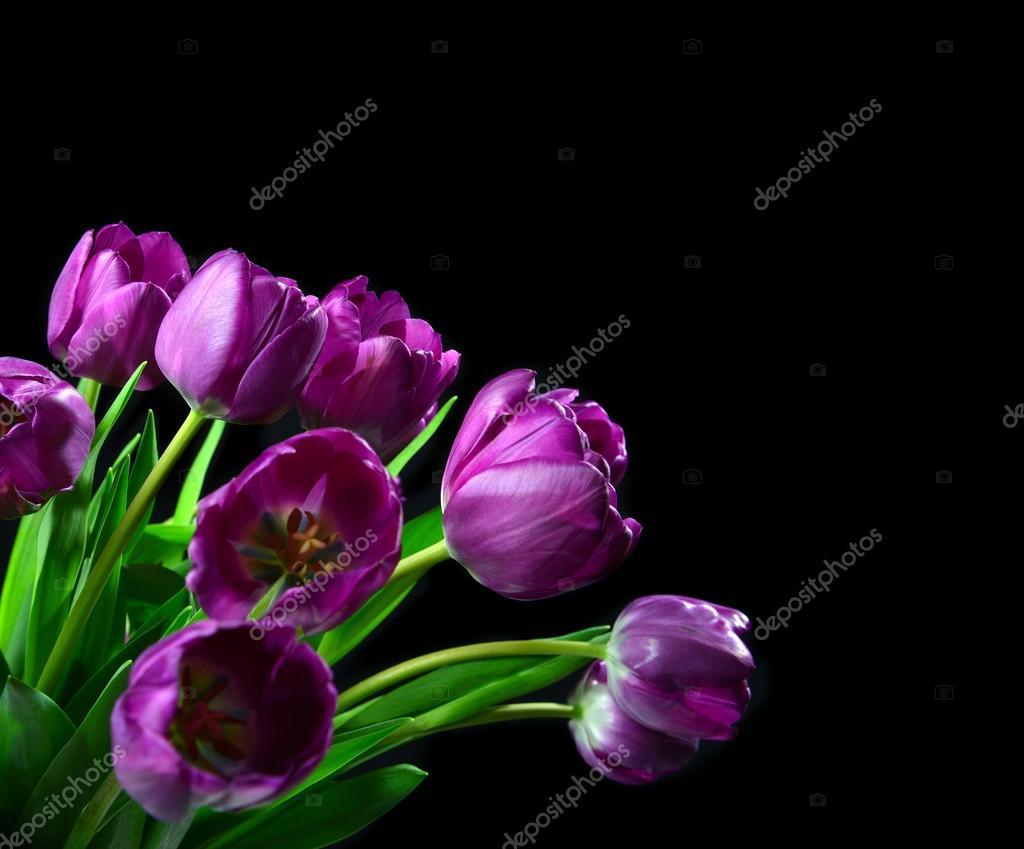 bouquet of dark purple tulip flowers on a black background