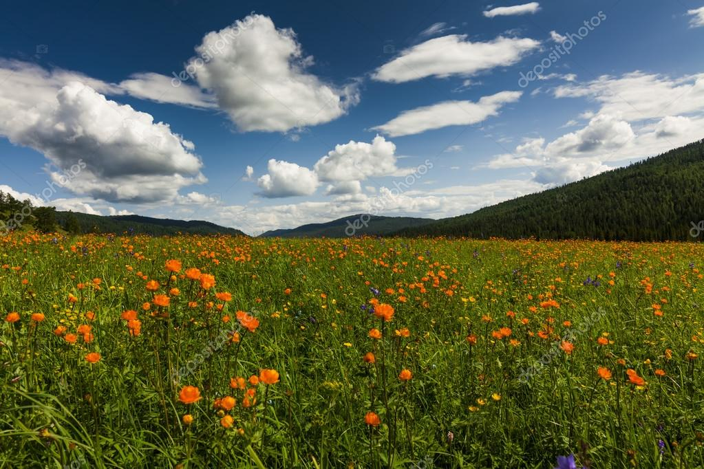 Amazing views of the flowery meadow on background of the mountai