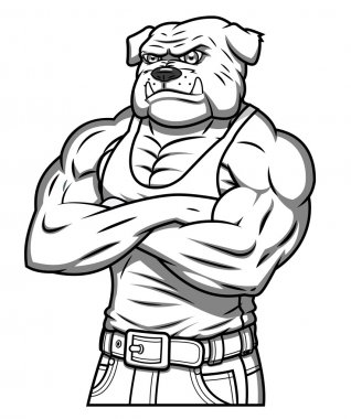 Strong muscle aggressive bulldog 2